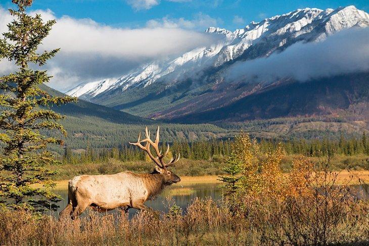 پارک ملی جاسپر , آلبرتا کانادا