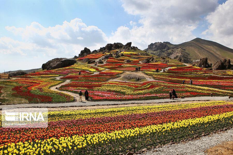 لاله های روستای کندر ، نشاط گل ها در دامان طبیعت زیبای البرز