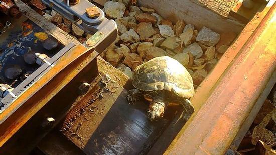 راه حل ژاپنی ها برای کمک به عبور لاکپشت ها از ریل قطار