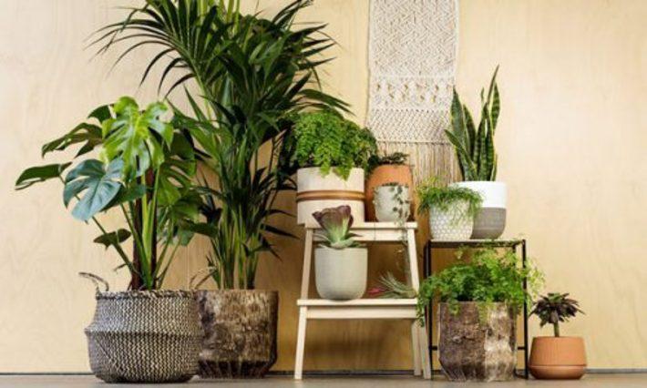 10 دلیل خیلی خوب برای نگهداری از گل و گیاهان در منزل