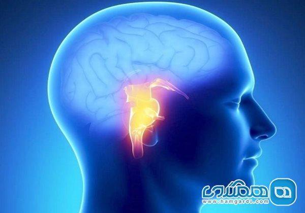 سلول های هدف در بیماری آلزایمر باعث آشفتگی در خواب فرد می شوند