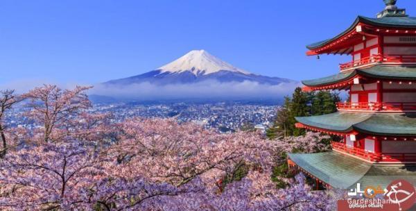 عجیب ترین مطالبی که از کوه فوجی نمی دانید